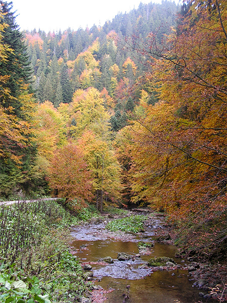 Valea Iadului toamna